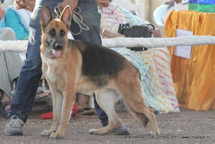 ex-202,gsd,sw-44,, Gujarat Kennel Club, DogSpot.in