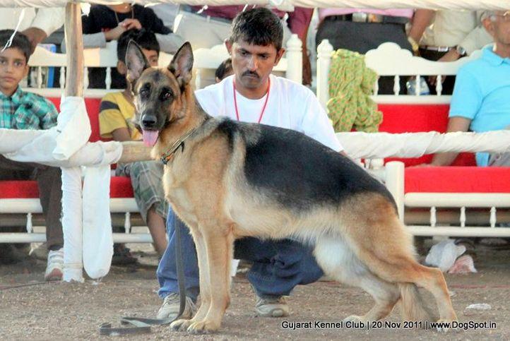 ex-203,gsd,sw-44,, Gujarat Kennel Club, DogSpot.in