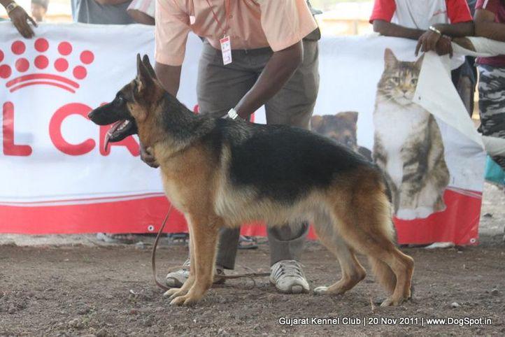 ex-204,gsd,sw-44,, Gujarat Kennel Club, DogSpot.in