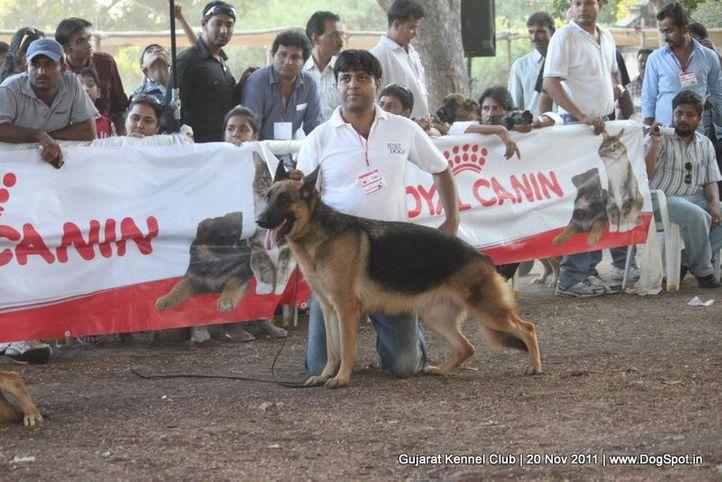 ex-206,gsd,sw-44,, Gujarat Kennel Club, DogSpot.in