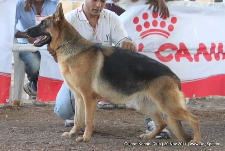 ex-208,gsd,sw-44,, Gujarat Kennel Club, DogSpot.in