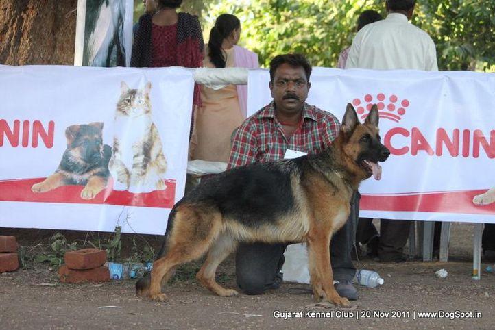 ex-211,gsd,sw-44,, Gujarat Kennel Club, DogSpot.in
