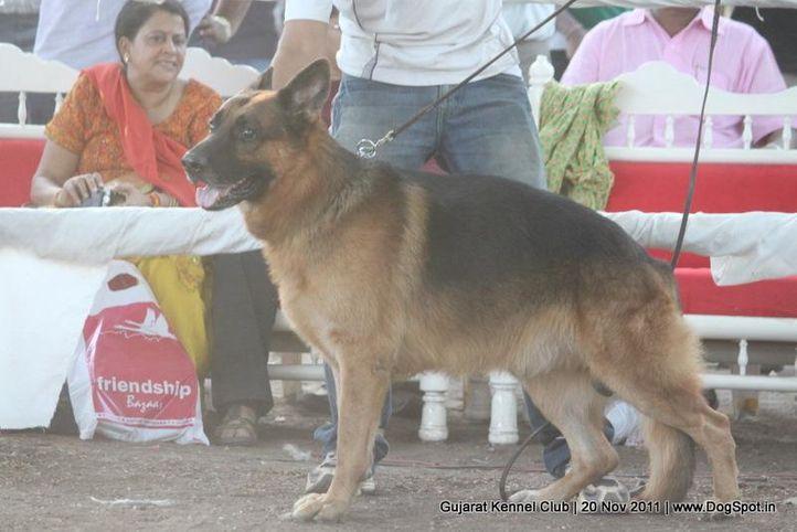 ex-220,gsd,sw-44,, Gujarat Kennel Club, DogSpot.in