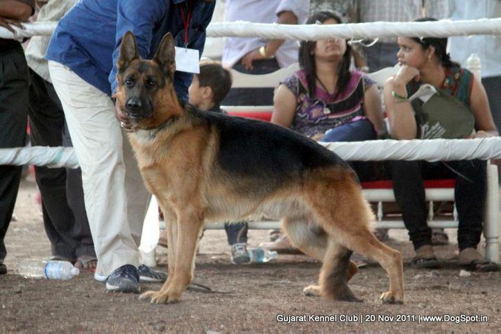 ex-228,gsd,sw-44,, Gujarat Kennel Club, DogSpot.in