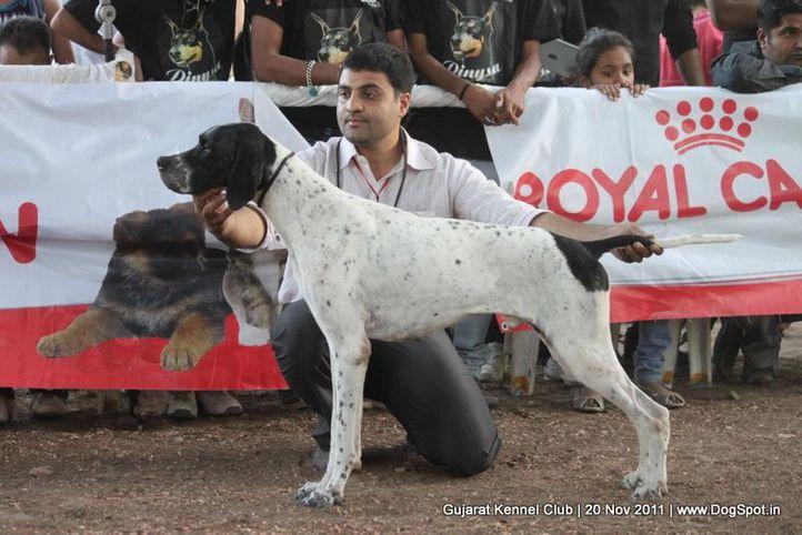 ex-56,pointer,sw-44,, Gujarat Kennel Club, DogSpot.in