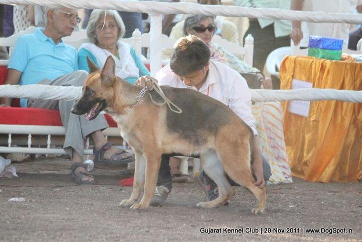 gsd,sw-44,, Gujarat Kennel Club, DogSpot.in