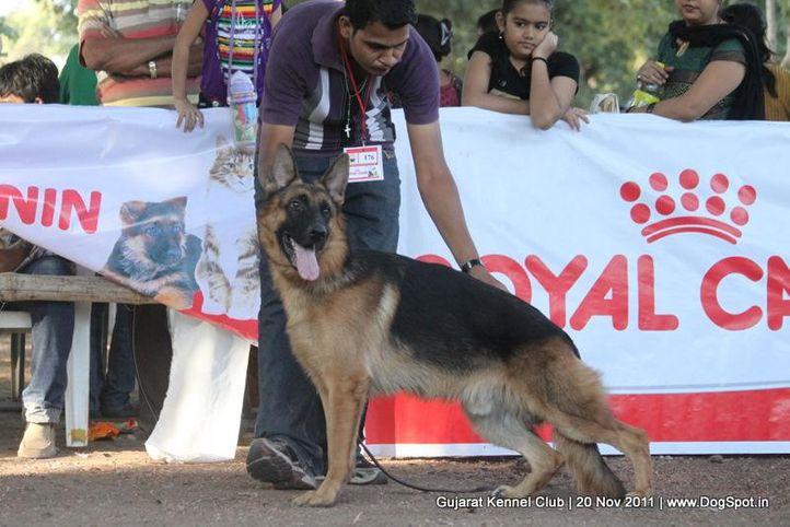 ex-176,gsd,sw-44,, Gujarat Kennel Club, DogSpot.in