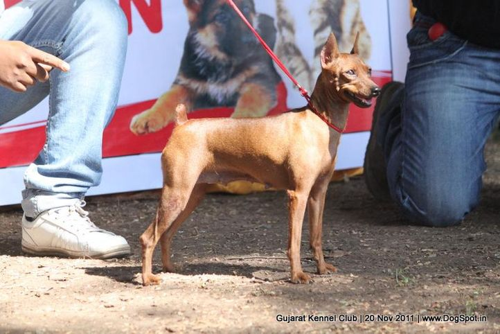 ex-4,miinpin,sw-44,, Gujarat Kennel Club, DogSpot.in