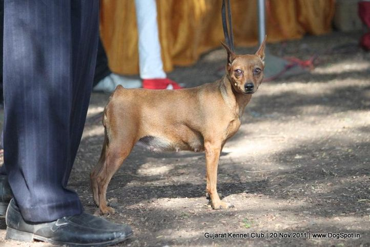 ex-5,miinpin,sw-44,, Gujarat Kennel Club, DogSpot.in
