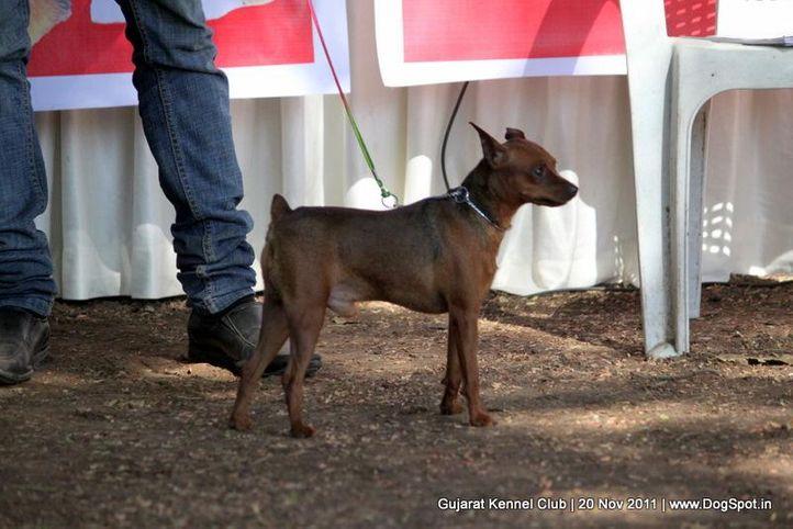 miinpin,sw-44,, Gujarat Kennel Club, DogSpot.in