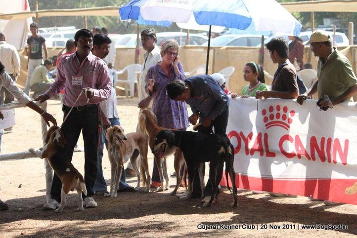 saluki, Gujarat Kennel Club, DogSpot.in