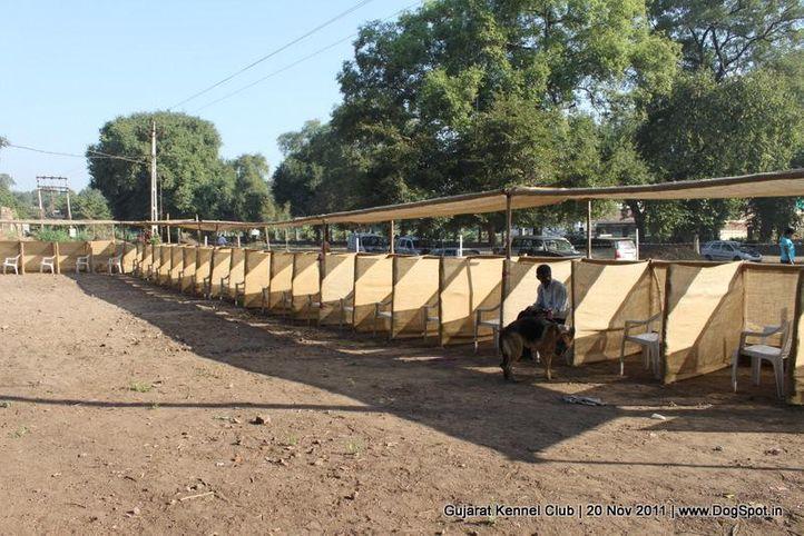 ground,sw-44,, Gujarat Kennel Club, DogSpot.in