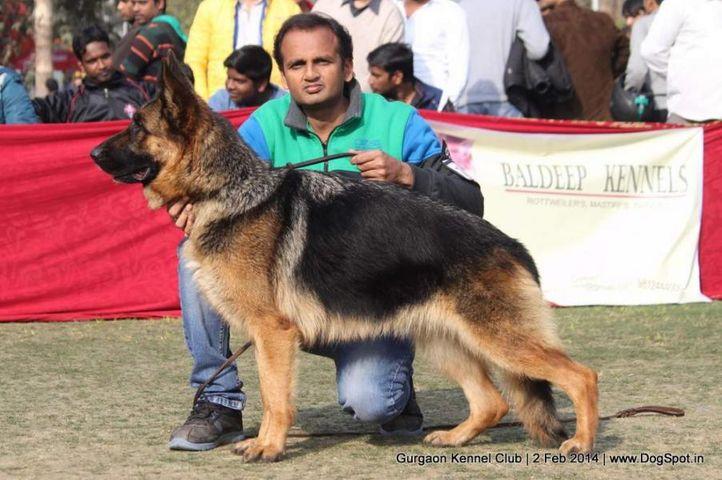 ex-199,gsd,,sw-113, ZAZIKI VOM FEUERMELDER, German Shepherd Dog, DogSpot.in