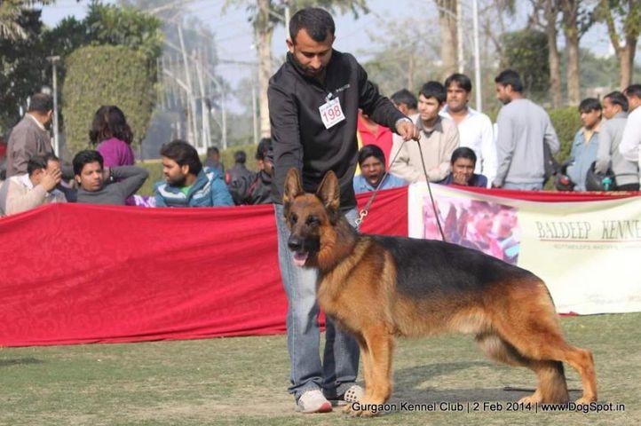 ex-198,gsd,,sw-113, SANARP'S ESKO, German Shepherd Dog, DogSpot.in