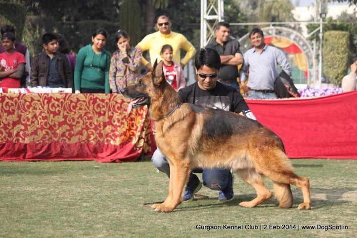 gsd,,sw-113, Gurgaon Dog Show (2 Feb 2014), DogSpot.in