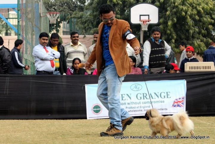 ex-5,pekingese,sw-77,, Gurgaon Dog Show 2012, DogSpot.in