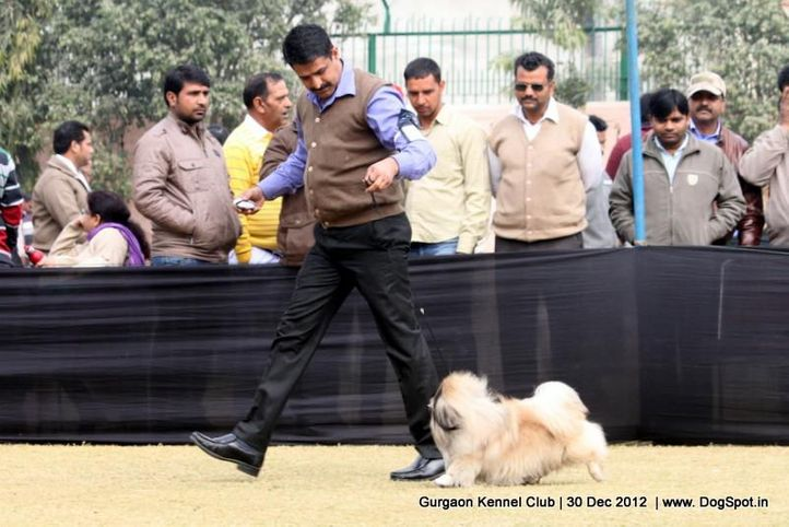 ex-6,pekingese,sw-77,, Gurgaon Dog Show 2012, DogSpot.in
