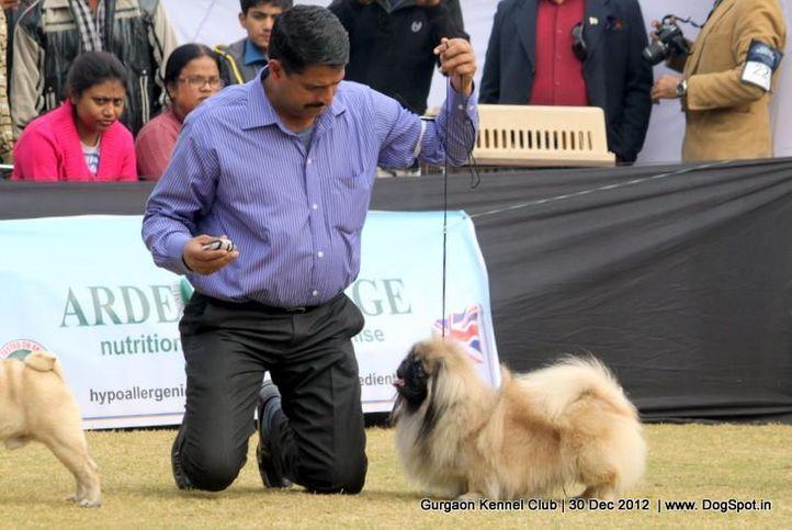 ex-6,pekingese,sw-77,, Gurgaon Dog Show 2012, DogSpot.in