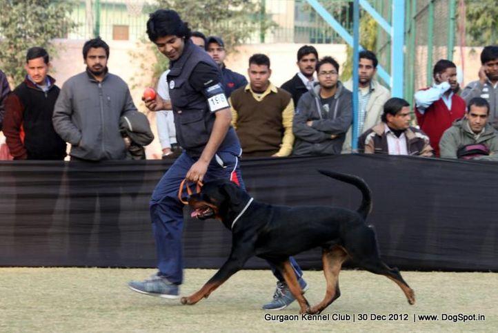 ex-198,rottweiler,sw-77,, Gurgaon Dog Show 2012, DogSpot.in
