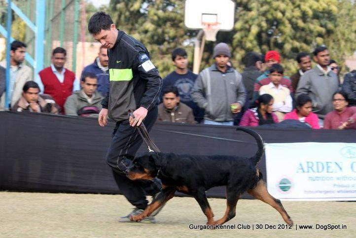 ex-218,rottweiler,sw-77,, Gurgaon Dog Show 2012, DogSpot.in