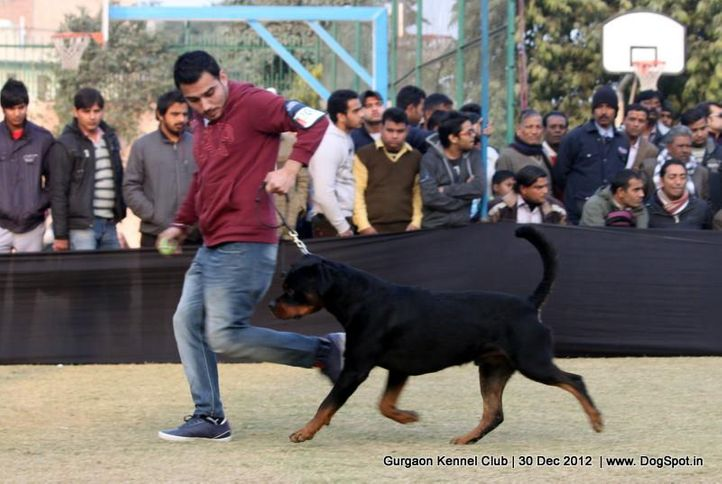 ex-203,rottweiler,sw-77,, Gurgaon Dog Show 2012, DogSpot.in