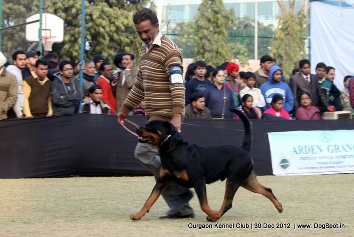ex-217,rottweiler,sw-77,, Gurgaon Dog Show 2012, DogSpot.in