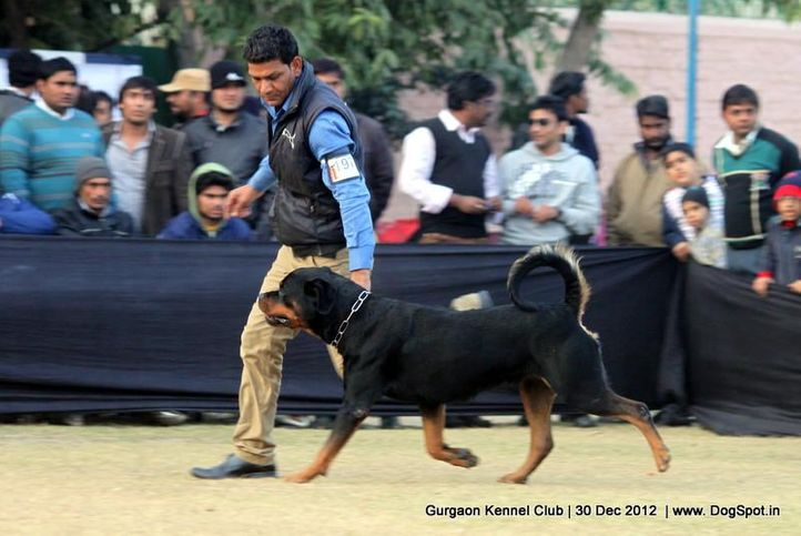 ex-197,rottweiler,sw-77,, Gurgaon Dog Show 2012, DogSpot.in