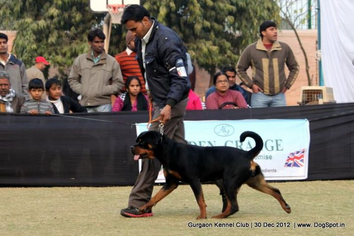 rottweiler,sw-77,, Gurgaon Dog Show 2012, DogSpot.in