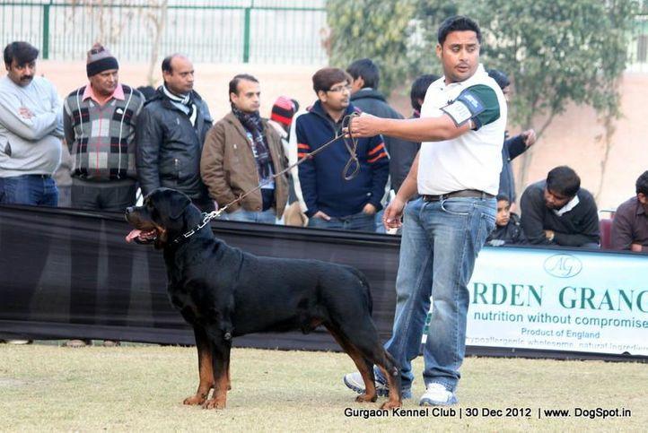 ex-208,rottweiler,sw-77,, Gurgaon Dog Show 2012, DogSpot.in