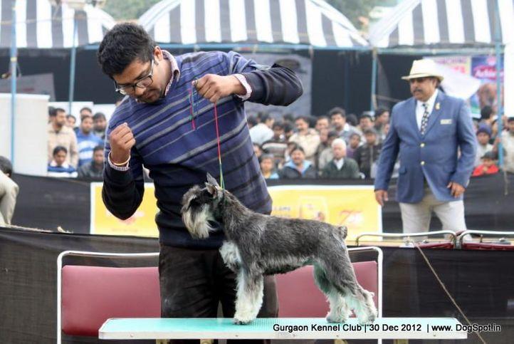 ex-112,sw-77,, Gurgaon Dog Show 2012, DogSpot.in