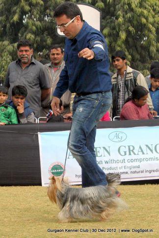 ex-32,sw-77,, Gurgaon Dog Show 2012, DogSpot.in