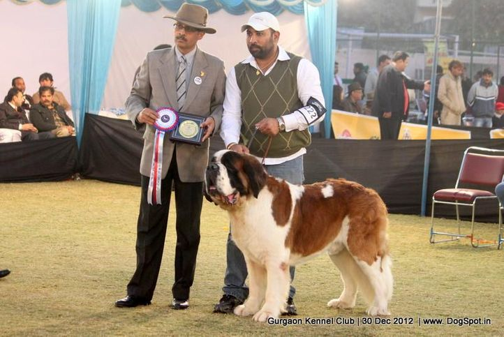ex-222,stbernard,sw-77,, Gurgaon Dog Show 2012, DogSpot.in