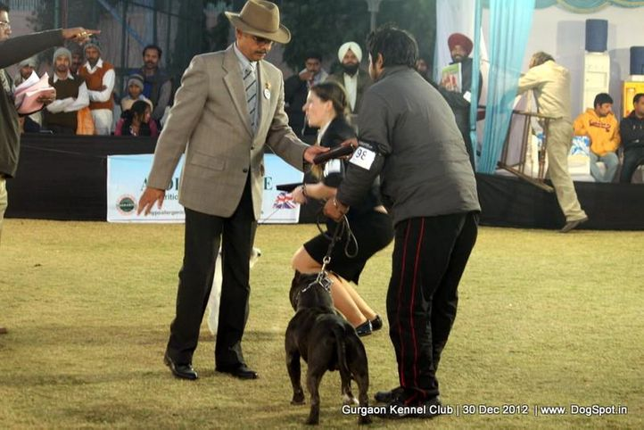 ex-98,sw-77,, Gurgaon Dog Show 2012, DogSpot.in