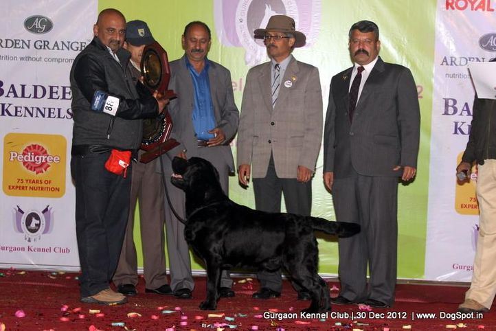 line up,sw-77,, Gurgaon Dog Show 2012, DogSpot.in