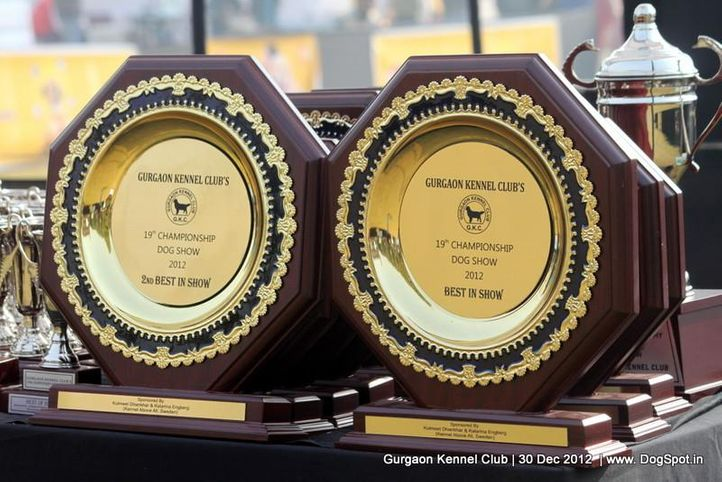 show trophy,sw-77,, Gurgaon Dog Show 2012, DogSpot.in
