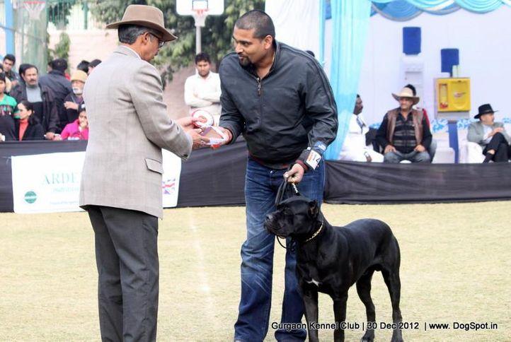 cane corso,ex-141,sw-77,, Gurgaon Dog Show 2012, DogSpot.in