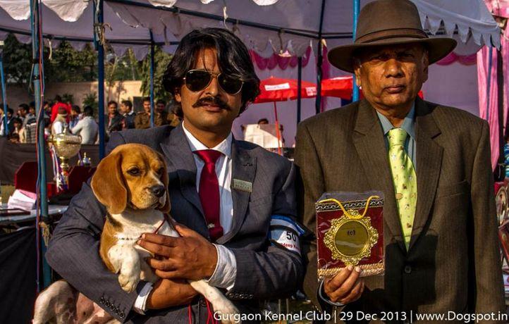beagle,ex-50,sw-109,, ZENITHS BLACK PEPPER, Beagle, DogSpot.in
