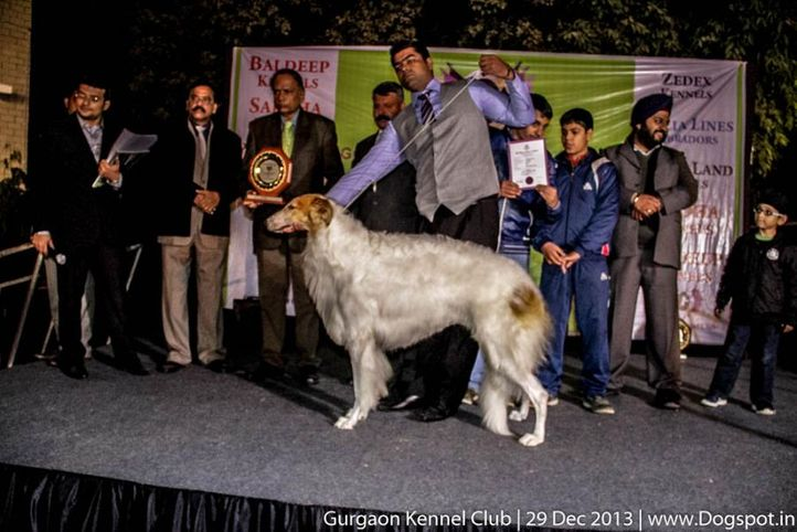 lineup,sw-109,, Gurgaon Dog Show 2013, DogSpot.in