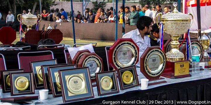 sw-109,trophy, Gurgaon Dog Show 2013, DogSpot.in