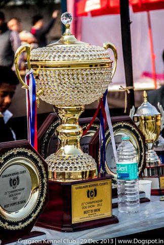 sw-109,, Gurgaon Dog Show 2013, DogSpot.in