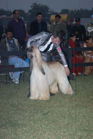 afghan,, Gurgaon Dog Show Day1, DogSpot.in
