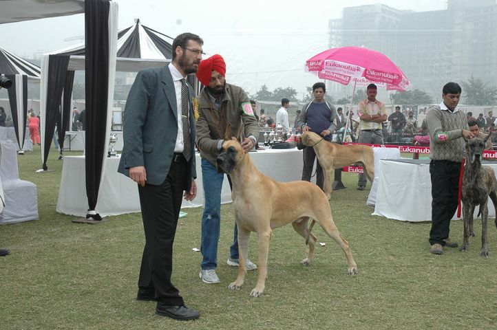 dane,greatdane,, Gurgaon Dog Show Day1, DogSpot.in