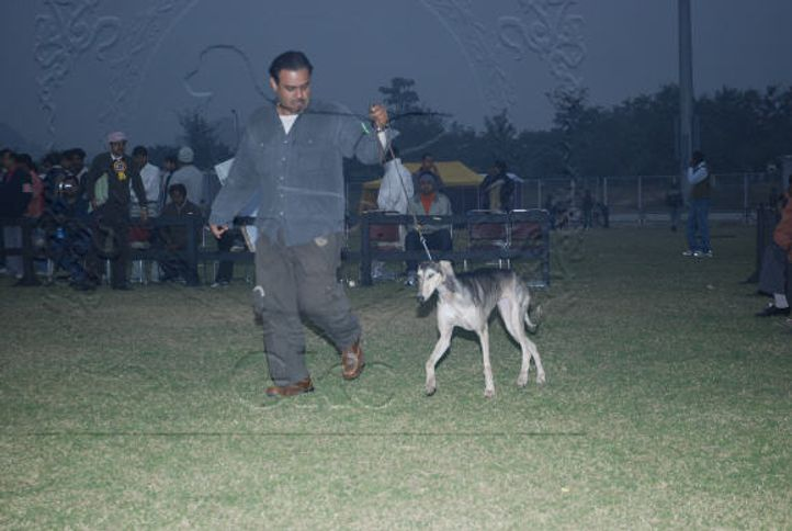 hounds,, Gurgaon Dog Show Day1, DogSpot.in