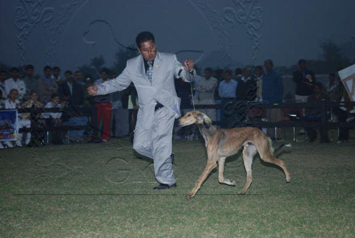 hounds,, Gurgaon Dog Show Day1, DogSpot.in