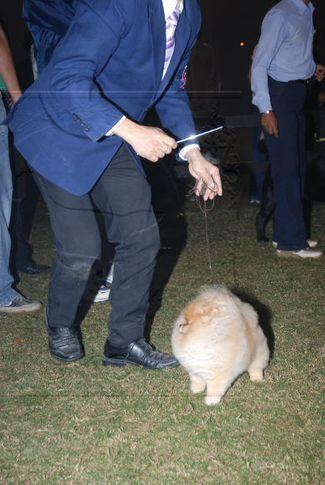 pom,, Gurgaon Dog Show Day1, DogSpot.in