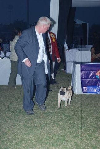 pug,, Gurgaon Dog Show Day1, DogSpot.in