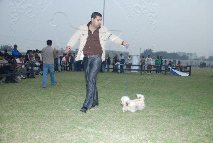 Apso,, Gurgaon Dog Show Day1, DogSpot.in