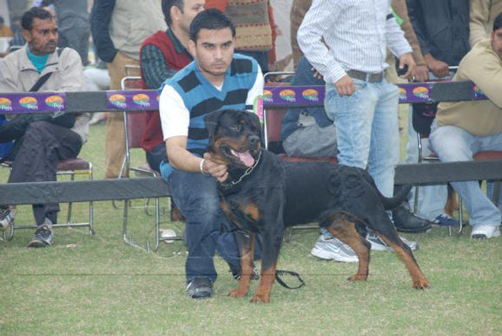 rott,, Gurgaon Dog Show Day1, DogSpot.in
