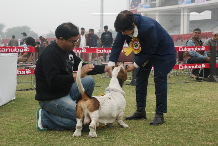 basset,, Gurgaon Dog Show Day1, DogSpot.in