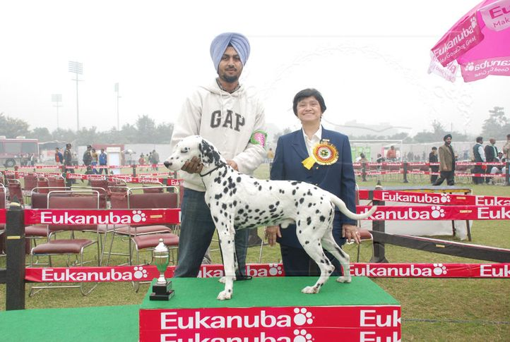 dalmatian,, Gurgaon Dog Show Day1, DogSpot.in